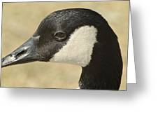 Portrait Of A Canadian Goose  Greeting Card