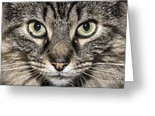 Portrait Of A Cat Greeting Card