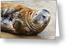 Portrait Of A Common Seal  Greeting Card