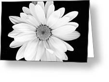 Portrait Of A Daisy Greeting Card