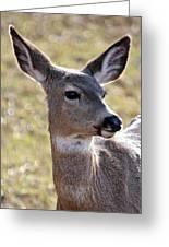 Portrait Of A Deer Greeting Card