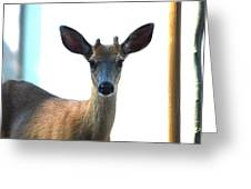 Portrait Of A Deer Greeting Card