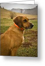 Portrait Of A Dog Greeting Card
