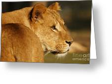 Portrait Of A Dreamy Lioness  Greeting Card