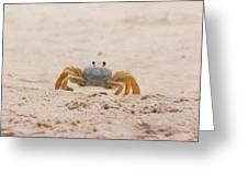 Portrait Of A Ghost Crab Greeting Card