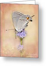 Portrait Of A Gray Hairstreak Greeting Card