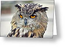 Portrait Of A Great Horned Owl II Greeting Card