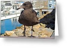Portrait Of A Grumpy Gull Greeting Card by Brian D Meredith