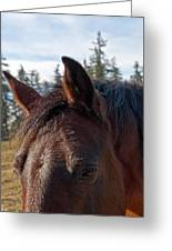 Portrait Of A Horse Greeting Card