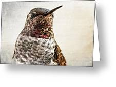 Portrait Of A Hummer Greeting Card