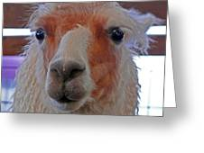 Portrait Of A Llama Greeting Card