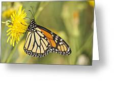 Portrait Of A Monarch Greeting Card