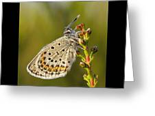 Portrait Of A Morning Dew Butterfly Greeting Card