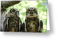 Portrait Of A Pair Of Owls Greeting Card