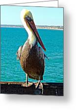 Portrait Of A Perky Pelican Greeting Card by Brian D Meredith