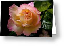 Portrait Of A Rose Greeting Card by Rona Black