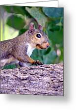 Portrait Of A Squirrel Greeting Card