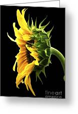 Portrait Of A Sunflower Greeting Card