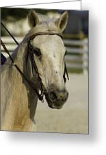 Portrait Of A Tan Horse Greeting Card