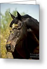 Portrait Of A Thoroughbred Greeting Card