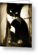 Portrait Of A Tuxedo Cat Iv Greeting Card