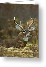 Portrait Of A White Tailed Buck Greeting Card