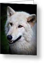 Portrait Of A White Wolf Greeting Card
