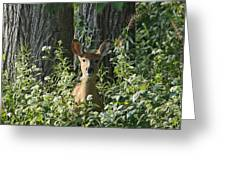 Portrait Of A Whitetail Fawn II Greeting Card