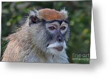 Portrait Of An Adult Patas Monkey II Greeting Card