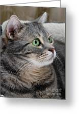 Portrait Of An Ameriican Shorthair Cat Greeting Card