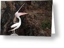 Portrait Of An Australian Pelican Greeting Card