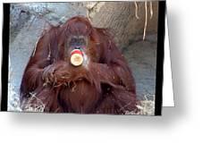 Portrait Of An Orangutan Greeting Card