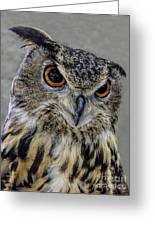 Portrait Of An Owl Greeting Card