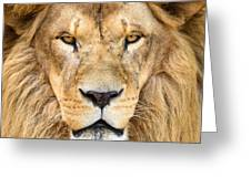 Portrait Of Beautiful African Lion Greeting Card