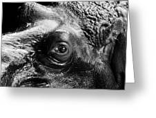 Portrait Of Hippo In Black And White Greeting Card