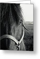 Portrait Of Horse In Black And White Greeting Card