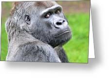 Portrait Of King Kongs Cousin II Greeting Card