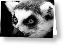 Portrait Of Lemur In Black And White Greeting Card