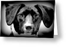 Portrait Of Man's Best Friend II Greeting Card