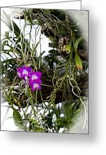 Portrait Of Orchids Greeting Card