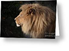 Portrait Of The King Of The Jungle  Greeting Card