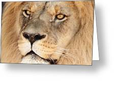 Portrait Of The Lion Greeting Card