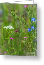 Portrait Of Wildflowers Greeting Card