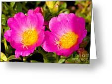 Portulaca Flower Greeting Card