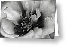 Portulaca II Greeting Card