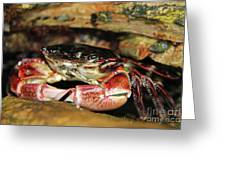 Posing Crab Greeting Card