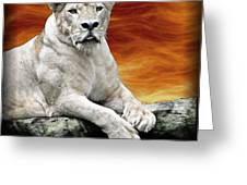 Posing Lioness Greeting Card