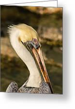 Posing Pelican Greeting Card