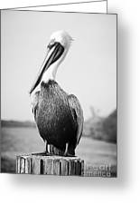 Posing Pelican - Black And White Greeting Card