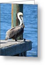 Posing Pelican Greeting Card